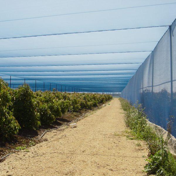 Agricolor-Azul-20-Raschel-Paltas-Israel-2