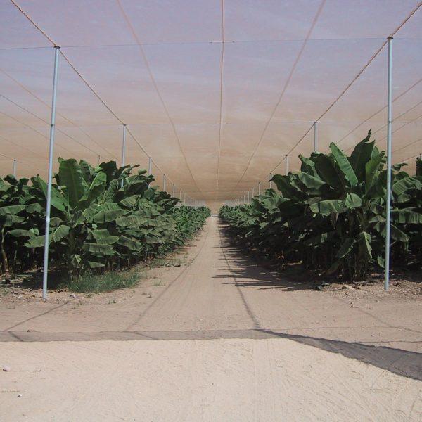 Agristop-AIN-16x10-Bananas-Israel-2