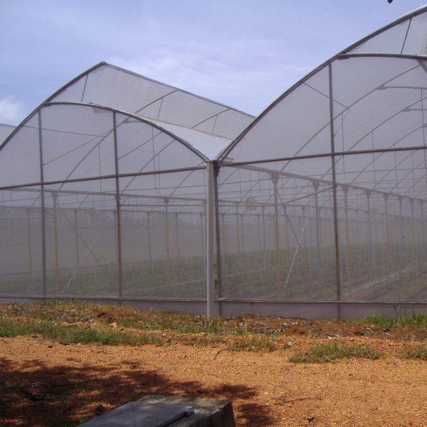 Agristop-AIN-40-mesh.16x10.-Pimientos.3